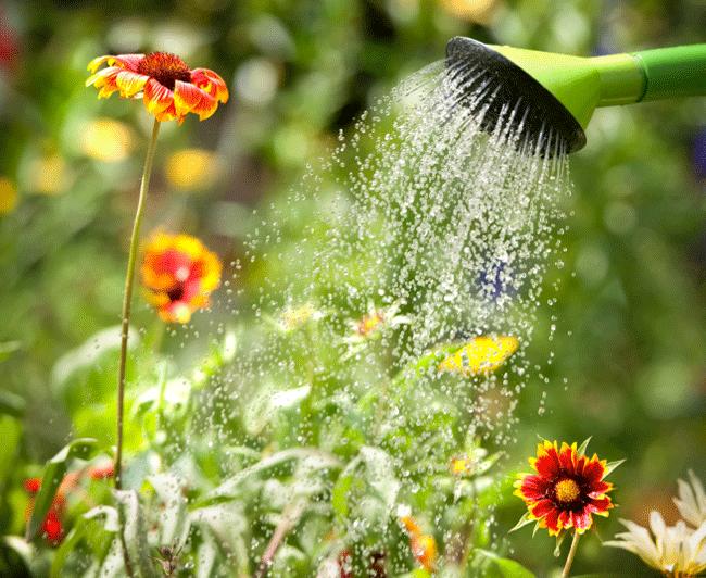 Flores-sendo-regadas