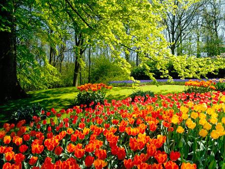 Confira dez dicas para decorar jardim