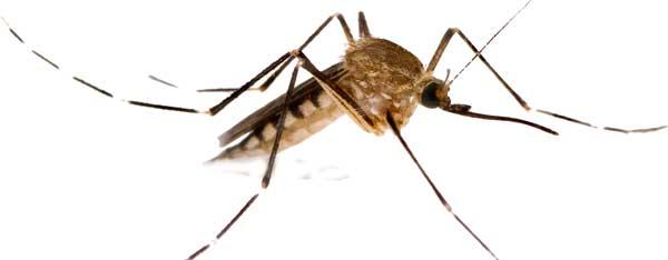 Mosquito da Dengue e a Manutenção Predial