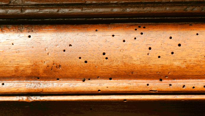 Cupim de madeira – Como prevenir
