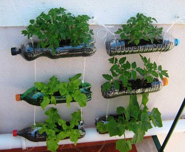 o-que-plantar-em-jardim-pequeno