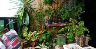 Escolha as plantas mais adequadas para colocar no seu apartamento