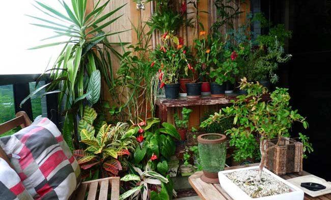 Saiba como escolher o melhor tipo de planta para a sua casa