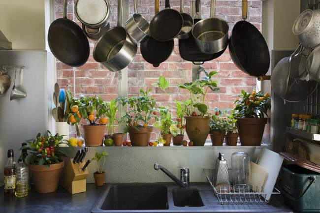 Tipos de plantas para ter em casa