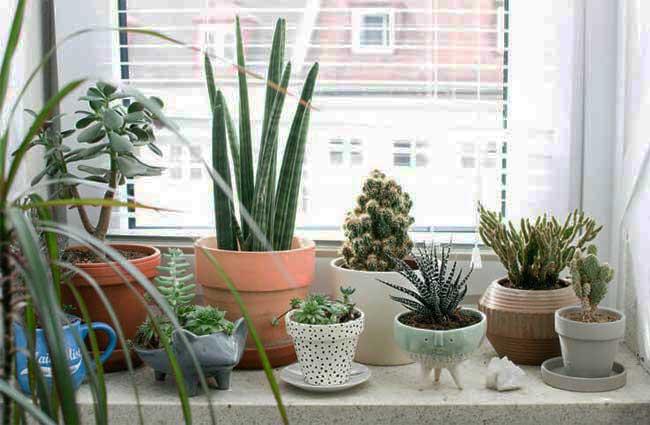 vasos com plantas ornamentais