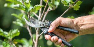 Como fazer poda de árvores