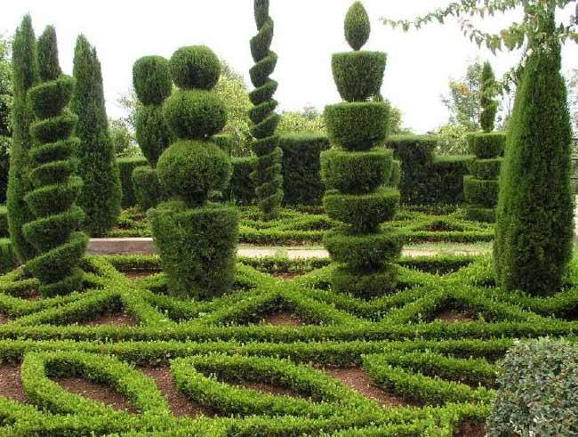 árvores com podas decoradas