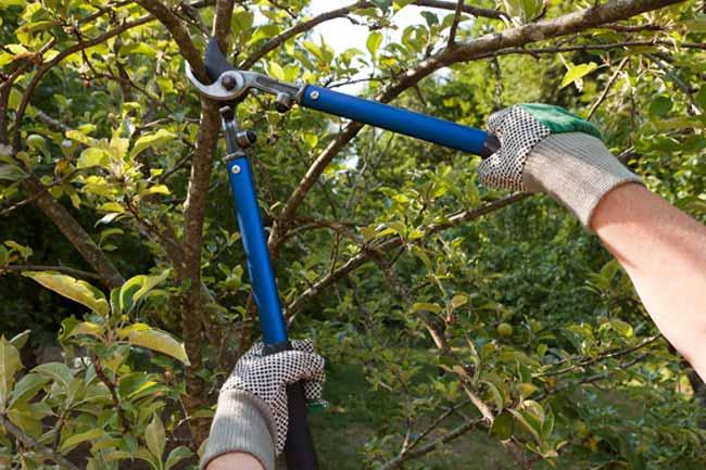 como podar árvore