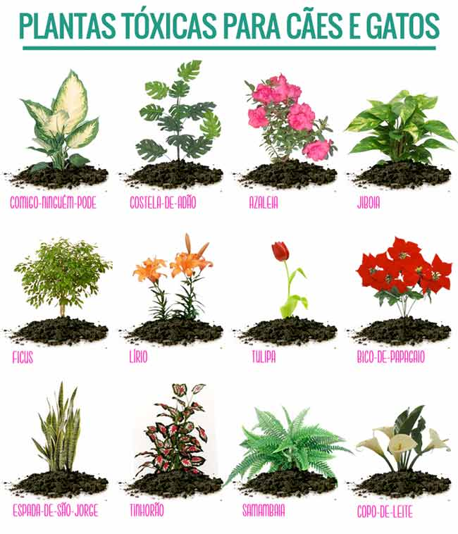plantas proibidas para cachorros e gatos