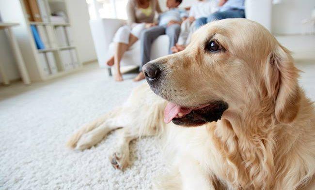 Veja como reformar sua casa pensando no seu Pet