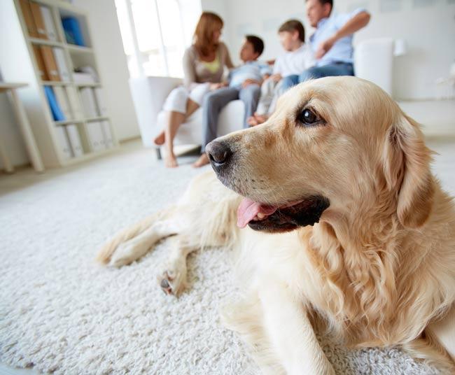 como reformar casa com animais