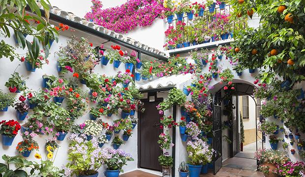Ter um jardim vertical colorido em casa
